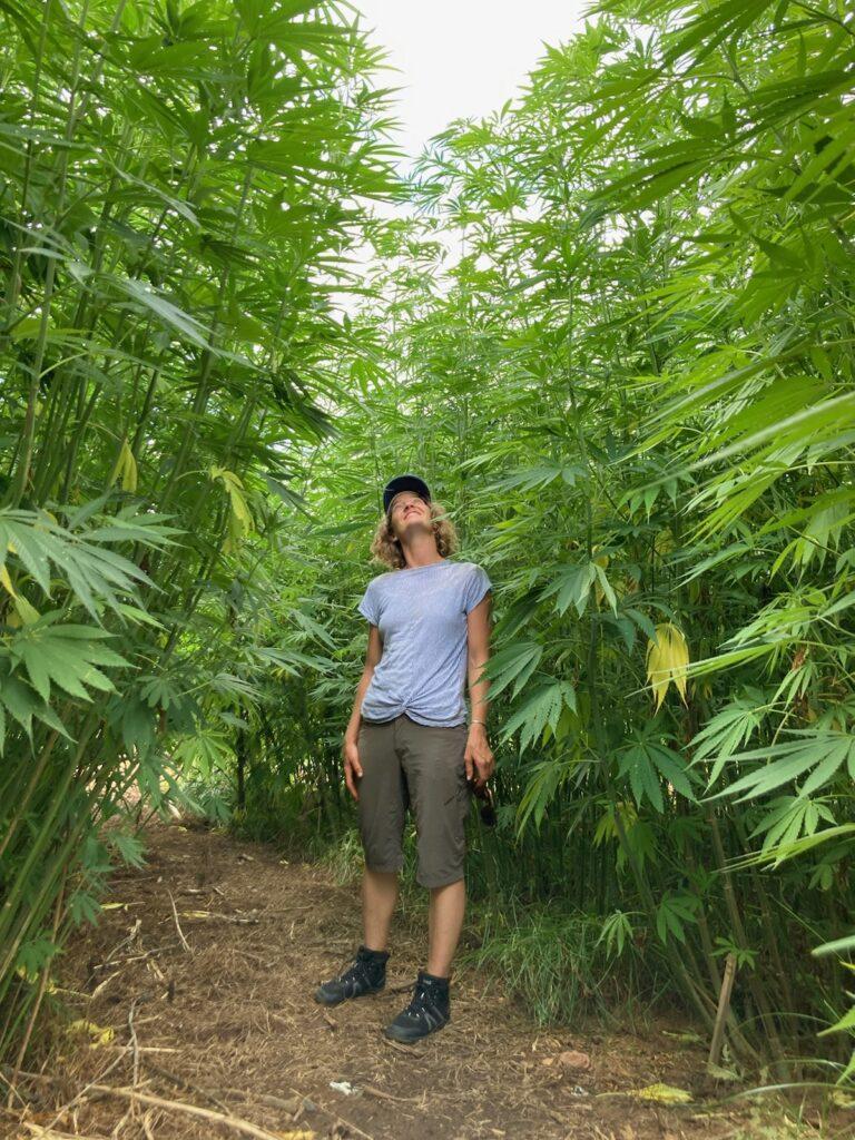 woman in fiber hemp field
