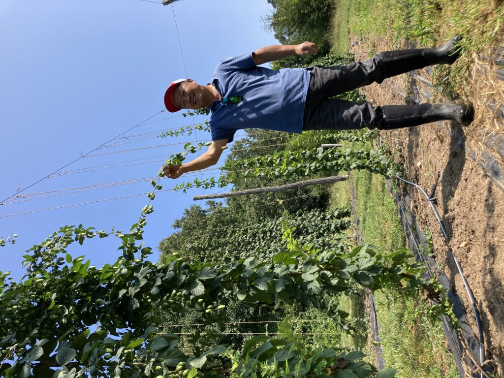 Luping Qu showing long side arem on hop plant