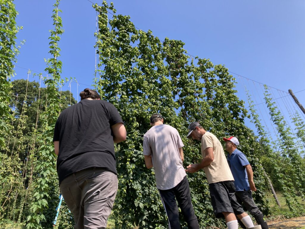 brewers looking at new hop lines at NC State